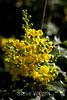 Flowers - Japanese Friendship Garden #0434