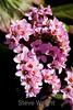 Flowers - Japanese Friendship Garden #0390