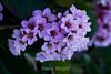 Flowers - Japanese Friendship Garden #0385