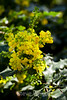 Flowers - Japanese Friendship Garden #0410