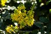 Flowers - Japanese Friendship Garden #0422