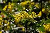 Flowers - Japanese Friendship Garden #0436