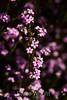 Flowers - Japanese Friendship Garden #0335