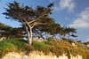 Majestic Cypress Seaside