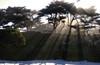 Sun Rays, Morning