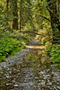 Muir Woods (18)