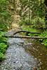 Muir Woods (17)