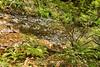 Muir Woods (15)