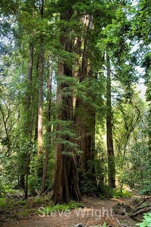 Muir Woods National Park, CA 9-28-2008