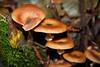 Fungi - Muir Woods #8843