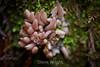 Fungi - Muir Woods #8998