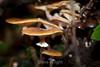 Fungi - Muir Woods #8840