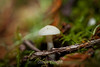 Fungi - Muir Woods #8929