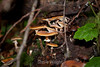 Fungi - Muir Woods #8836