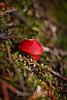 Fungi - Muir Woods #8944