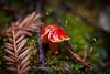 Fungi - Muir Woods #8993