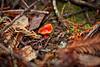 Fungi - Muir Woods #8937