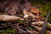 Fungi - Muir Woods #8956