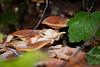 Fungi - Muir Woods #8837