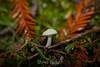 Fungi - Muir Woods #8930