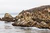 Granite Point - Point Lobos #6320