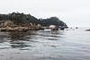 Whalers cove Guillmot Island - Point Lobos #6296