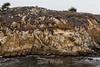 Granite Point - Point Lobos #6308