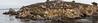 Granite Point - Point Lobos #6300-Pano
