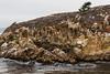 Granite Point - Point Lobos #6304