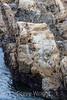 Sandstone Concretions - Point Lobos #6517