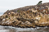 Granite Point - Point Lobos #6318