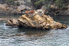 Whalers Cove - Point Lobos #6225