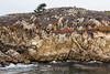Granite Point - Point Lobos #6316