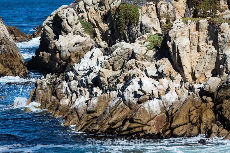 Cormorants - Point Lobos #6069