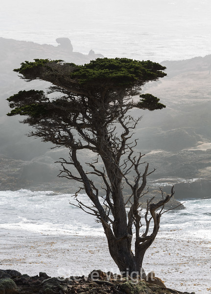 Cypress Trees - Point Lobos #6380