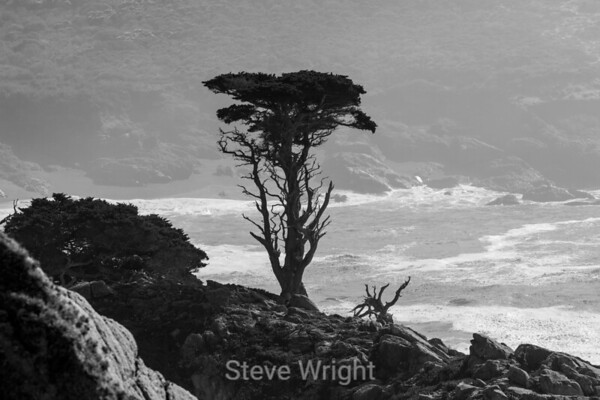 Point Lobos 11-4-2016