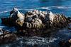 Pinnacles - Point Lobos #6639