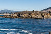 Granite Point - Point Lobos #6637