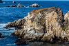 Granite Point - Point Lobos #6607