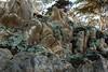 Bluff Lettuce - Point Lobos #1425