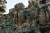 Bluff Lettuce - Point Lobos #1422