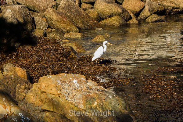 Point Lobos 1-3-2015