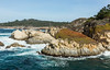 China Cove - Point Lobos #6822