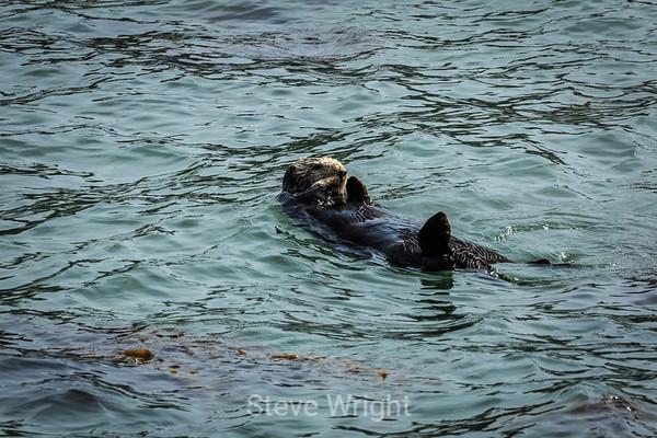 Point Lobos 2-17-2014