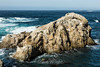 Bird Island - Point Lobos #6817