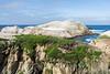 Bird Island - Point Lobos #3356