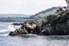 Canary Point - Point Lobos #3470