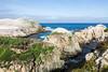Bird Island - Point Lobos #3352