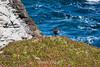 Canada Geese - Point Lobos #9647
