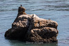 Whaler's Cove - Point Lobos #7132